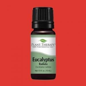Eucalyptus Radiata er mildara afbrigði af Eucalyptus ilminum
